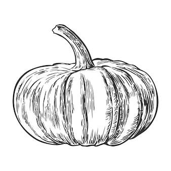 Citrouille. illustration de gravure vintage. isolé sur fond blanc.