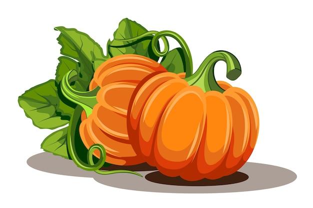 Citrouilles avec des feuilles sur fond blanc. illustration orange mûre citrouille - courge pour halloween, fête des récoltes d'automne ou jour de thanksgiving. légumes respectueux de l'environnement.