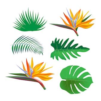 Clip art sertie de plantes de la jungle tropicale lumineuse, feuilles de palmier et fleurs