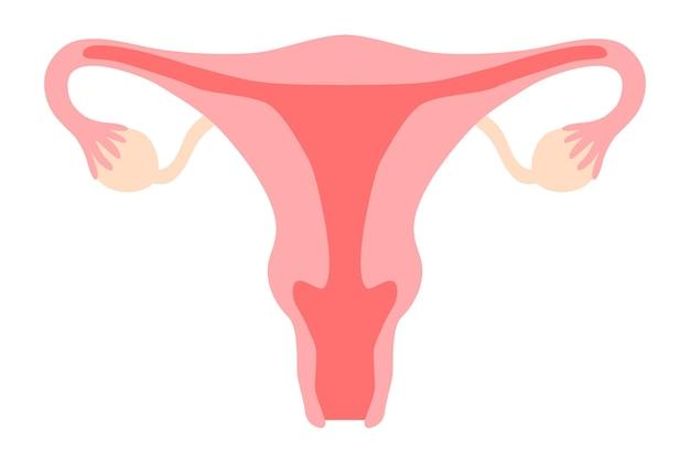 Le clipart du système reproducteur de la femme comprend l'utérus utérus vagin ovaire col de l'utérus