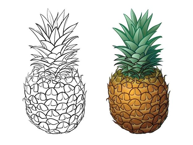 Clôtures de jardin et des signes avec la texture du bois. illustration vectorielle définie isoler sur blanc