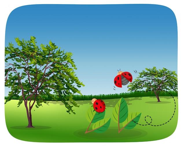 Coccinelle dans un paysage naturel