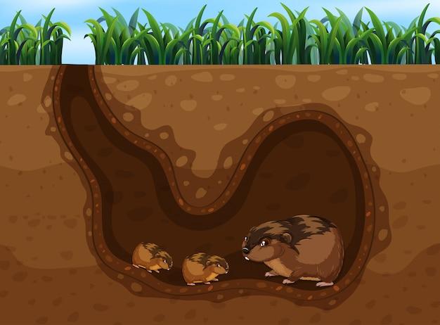 Cochon d'inde dans le trou