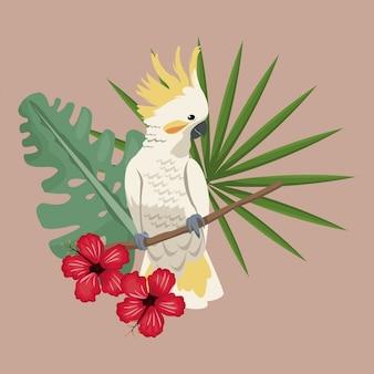 Cockatoo oiseau exotique feuilles d'hibiscus