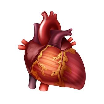 Coeur humain sain rouge avec des artères bouchent vue de face isolé sur fond blanc