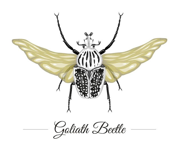 Coléoptère goliath tropical coloré dessiné à la main avec des ailes isolées. logotype sur le thème tropic pour un design naturel. illustration d'insectes exotiques