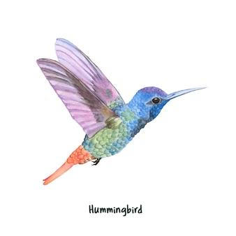 Colibri dessiné main isolé sur fond blanc