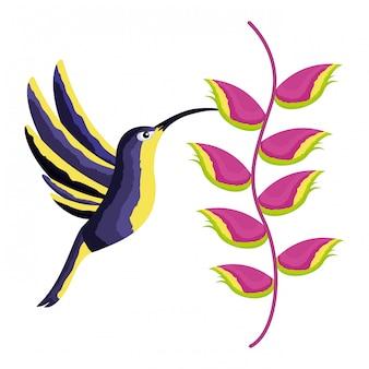 Colibri oiseau heliconia fleur tropicale