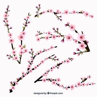 La collecte des branches en fleurs