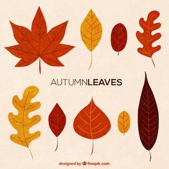 Collecte de feuille d'automne