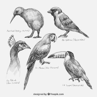 La collecte des oiseaux dessinés à la main