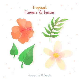 Collectio feuilles et fleurs tropicales