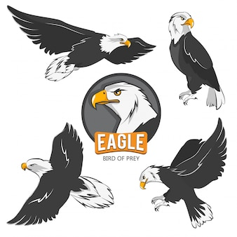 Collection d'aigles de dessin animé. isoler les oiseaux volants sur blanc