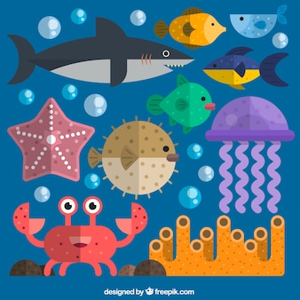 Collection d'animaux marins