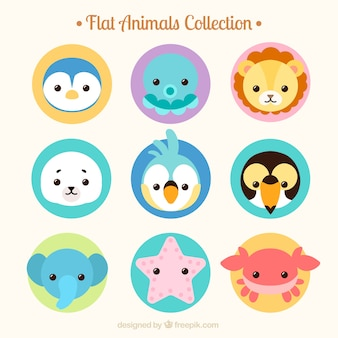 Collection d'animaux sauvages et marins