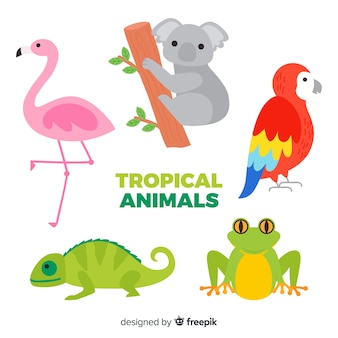 Collection d'animaux tropicaux design plat