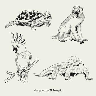 Collection d'animaux tropicaux dessinés à la main
