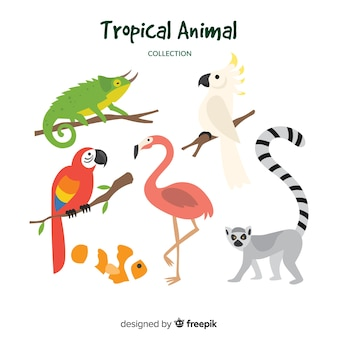 Collection d'animaux tropicaux dessinés à la main