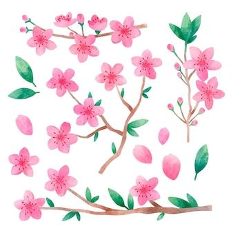 Collection aquarelle de fleurs de cerisier