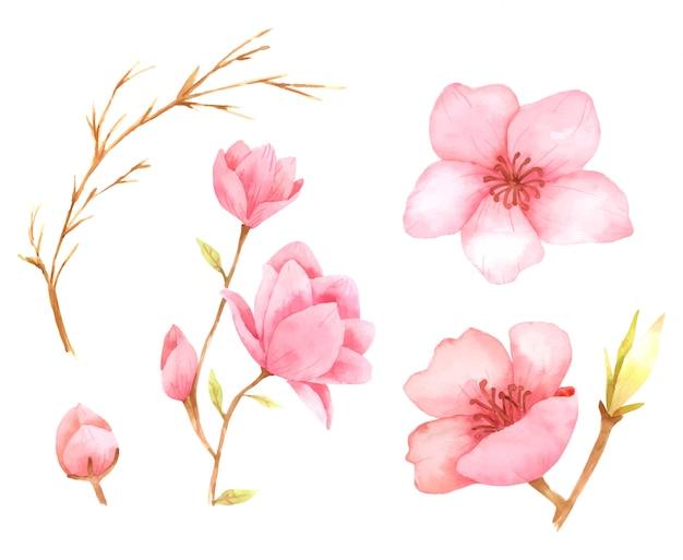 Collection d'aquarelle de peinture à la main d'éléments de fleur rose pour la conception