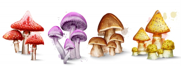 Collection d'aquarelles de champignons