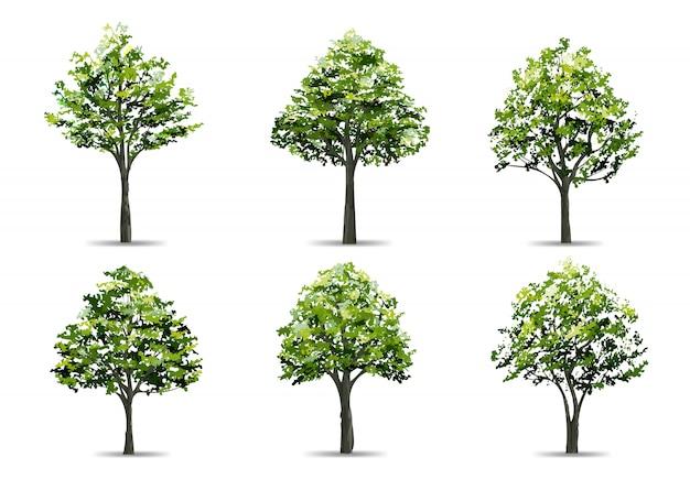 Collection d'arbre réaliste isolé sur fond blanc.