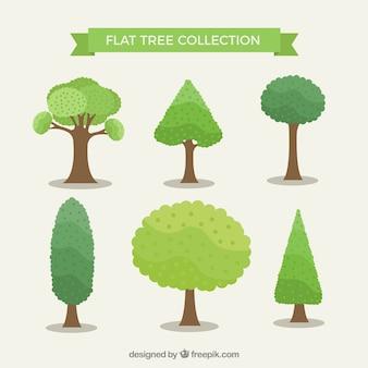 Collection d'arbres avec différentes espèces