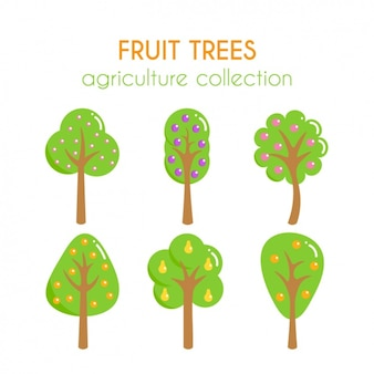 Collection les arbres fruitiers