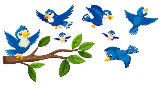 Collection d'arbres et d'oiseaux