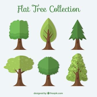 Collection d'arbres plats