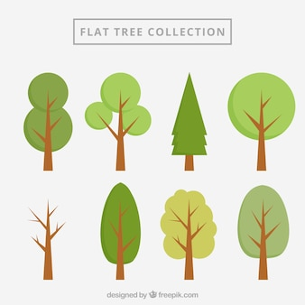 Collection arbres plats