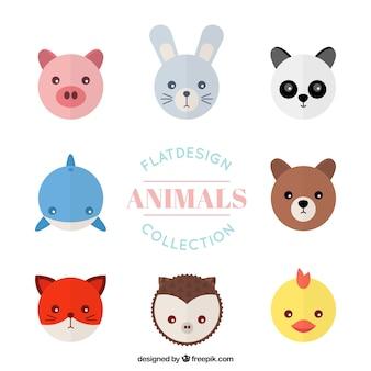 Collection avatar animal plat
