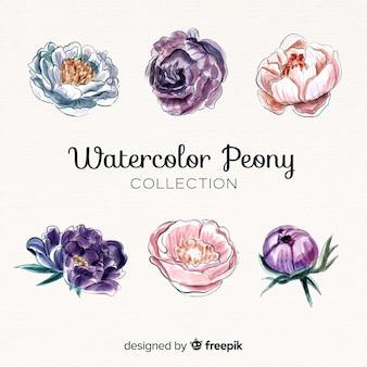 Collection de belles fleurs de pivoine aquarelle