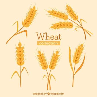 Collection de blé dessiné à la main