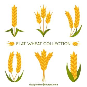 Collection de blé plat