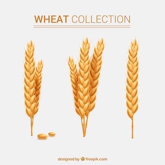 Collection de blé réaliste