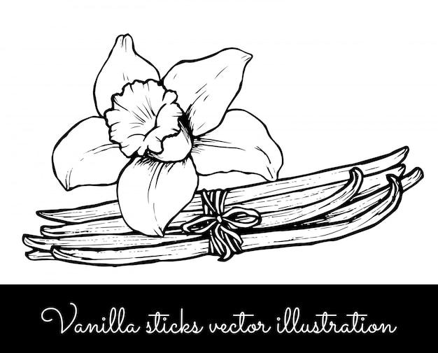 Collection de bouquet de fleurs de vanille vintage et de bâtonnets de vanille