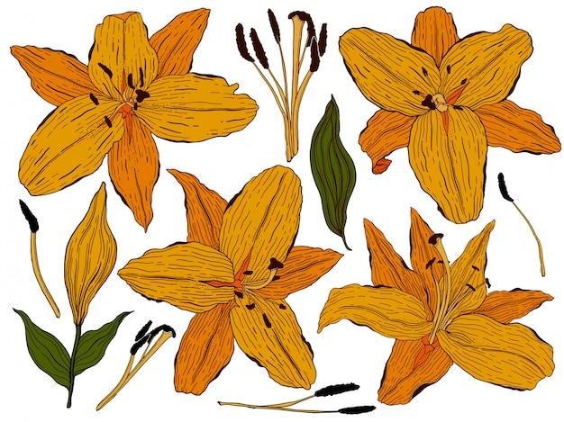 Collection de bourgeons de lys orange dessinés à la main et de feuilles vertes