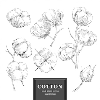 Collection de branche de croquis de coton