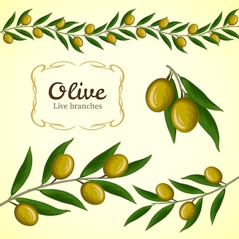 Collection de branche d'olivier, logo d'olives vertes