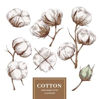 Collection de branches de coton