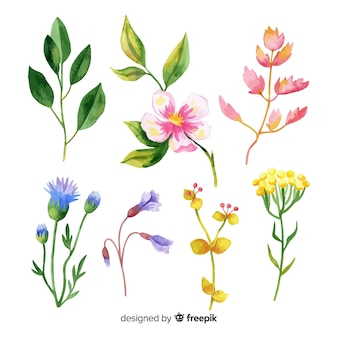 Collection de branches florales aquarelles