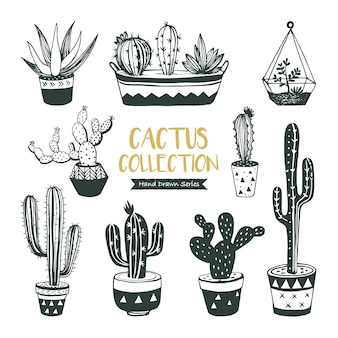 Collection de cactus et de plantes succulentes dessinés à la main