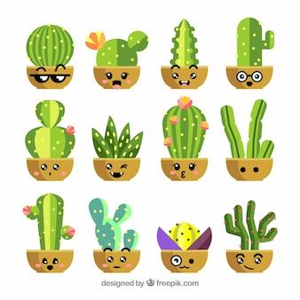 Collection de cactus plat