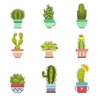 Collection de cactus en pot