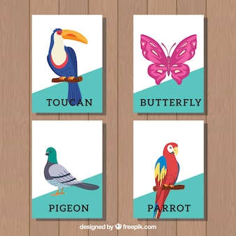 Collection de cartes avec les oiseaux et le papillon