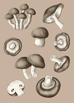 Collection de champignons biologiques frais
