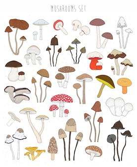 Collection de champignons colorés dessinés à la main. ensemble comestible