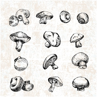 Collection de champignons dessinés à la main