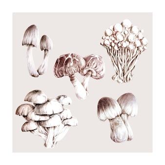 Collection de champignons dessinés à la main